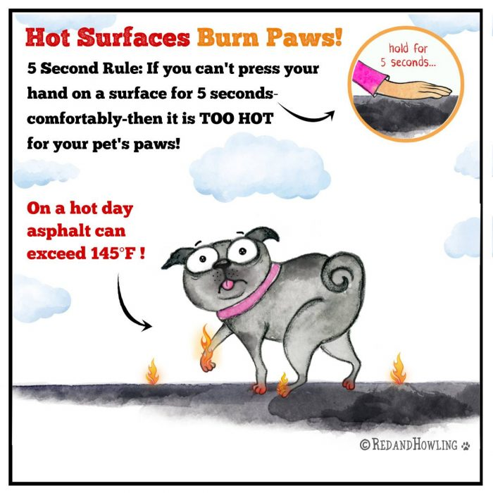 Hot surfaces burn paws! If you can't press your hand on a surface comfortably for 5 seconds then it's too hot for your pet's paws!