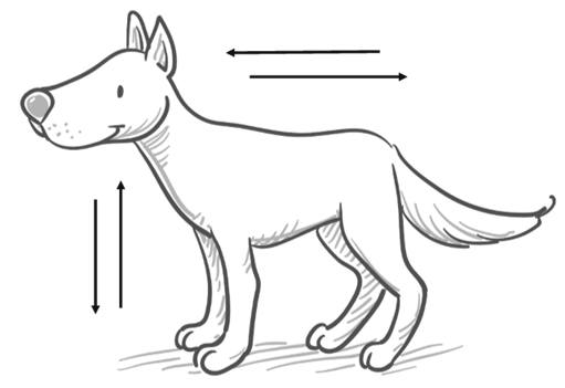 The neutral body posture: the dog is neither trying to make themselves big nor small, their centre of mass in the middle.