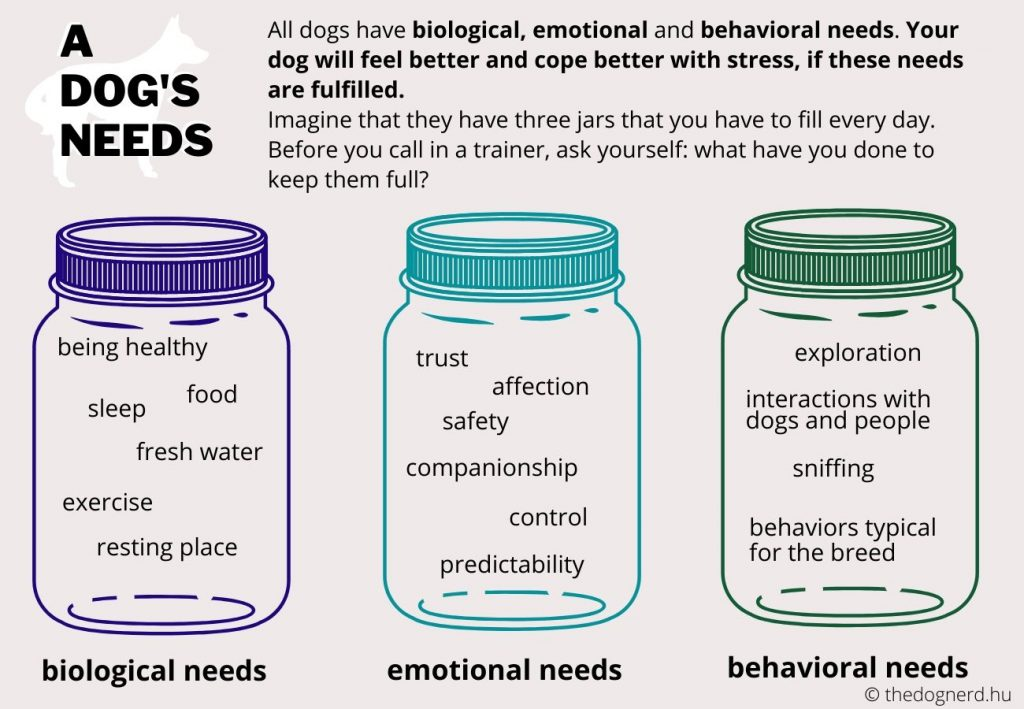 Dogs have biological (they're healthy, rest enough, have access to fresh water at all times...), emotional (companionship, safety, trust, fun…) and behavioral needs (exploration, sniffing, social interactions...)