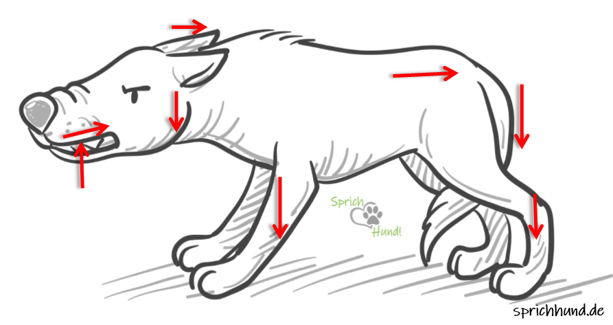 Defensive-threatening body language: the teeth show, the centre of mass moves downwards and backwards, the tail, head and ears move down - they are trying to seem smaller than they are. The more downwards-backwards movement you see, the more likely it is that the dog would rather escape than attack.