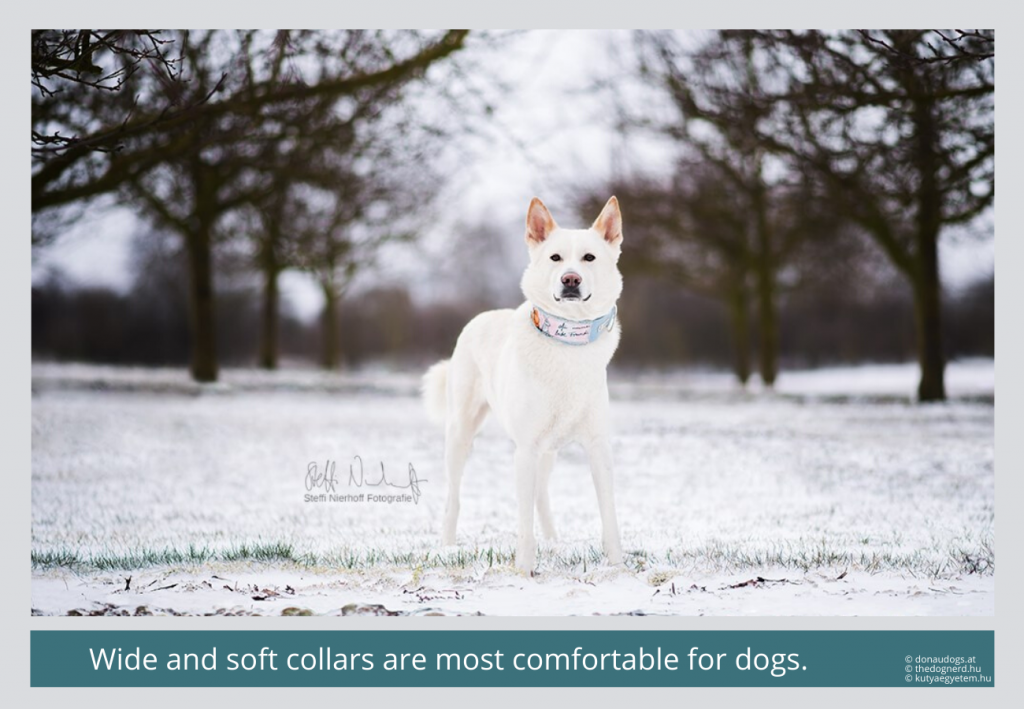 broad collars are the most comfortable for dogs