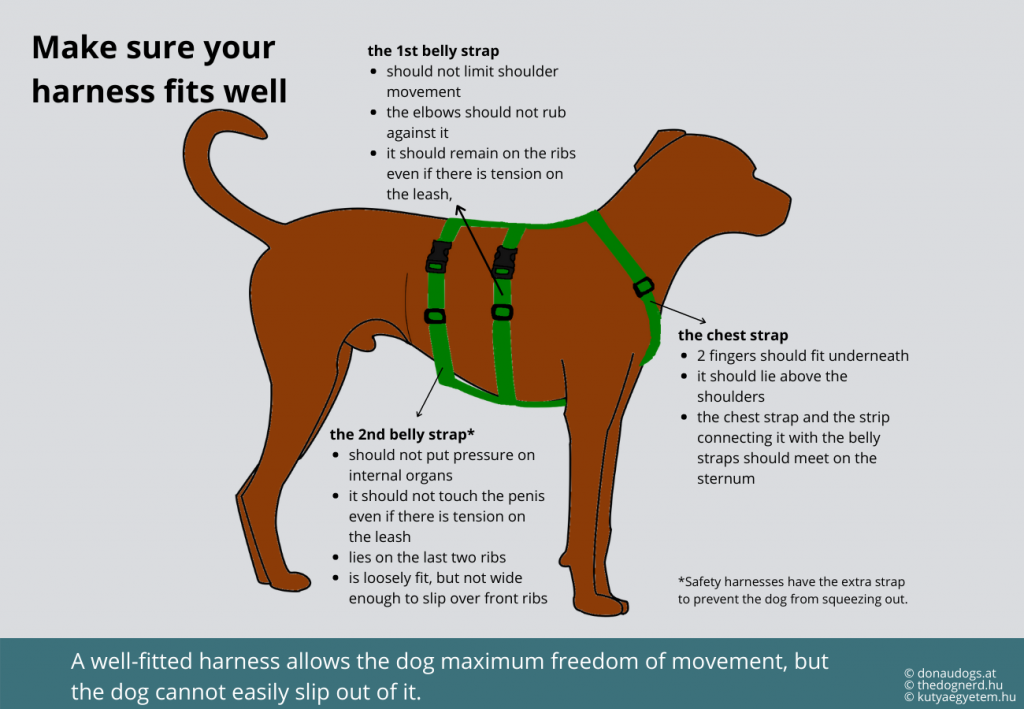 in a well fitting y-, x- or h-harness the breast strap lies on the sternum, the belly strap doesn't rub against the elbows and the harness stays in place