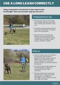 you can either let the long leash trail behind your dog, or roll it back and forth as you go. always gather the leash if someone is approaching.