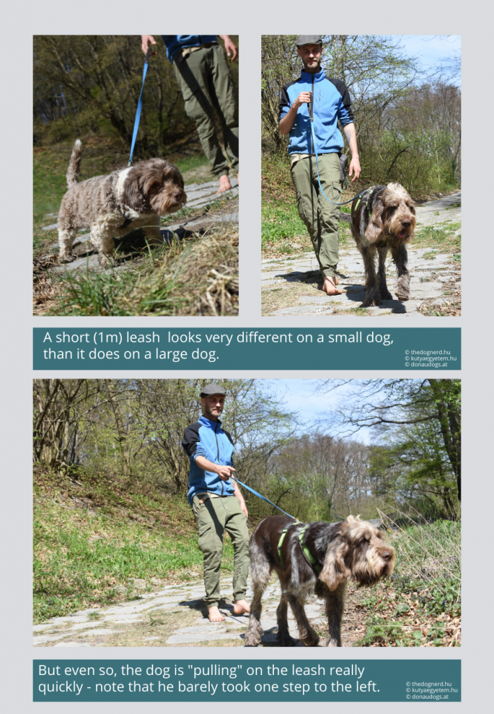 "even a large dog ""pulls"" quicky on a 1m leash, it's enough if he takes one step to the side"