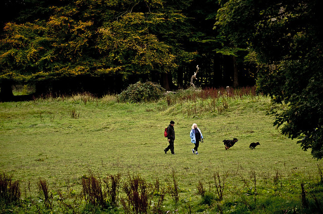 2 people walking 2 dogs in the fields