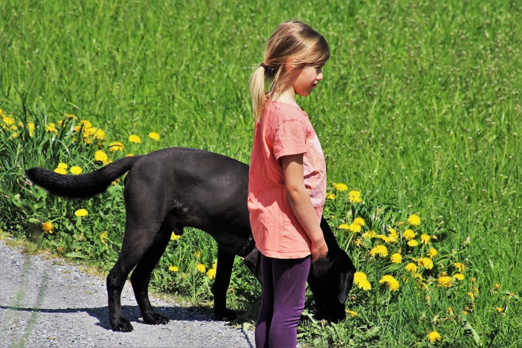 Dog and child exploring their surroundings together