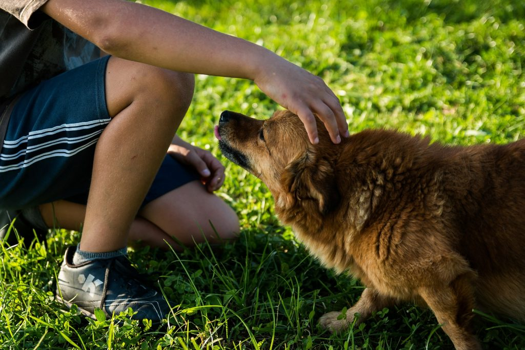 Image of dog and child: a tongue flick, ears pulled back, body mass directed downwards and to the back - this dog is not happy!
